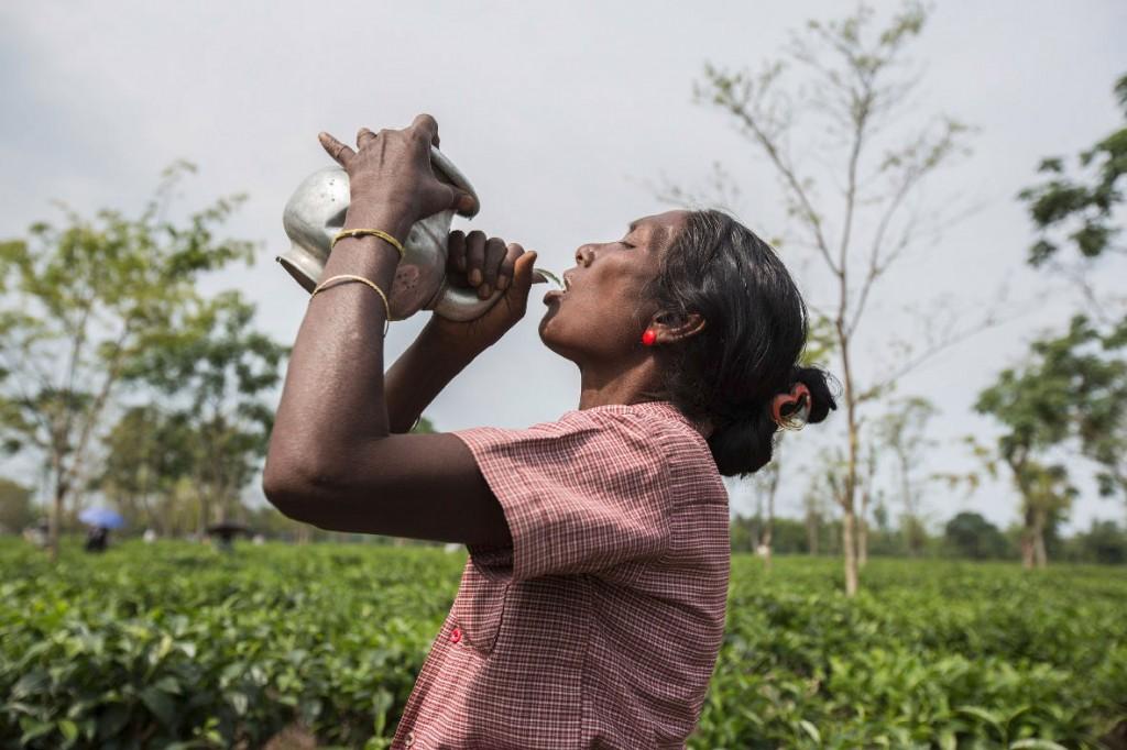 Eine Teepflückerin stillt während einer Pause ihren Durst. Da sauberes Trinkwasser rar ist, sind Fieber und Durchfallerkrankungen sehr häufig.