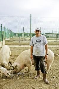 Die Häftlinge auf Gorgona betreuen auch die Tiere der Landwirtschaft.