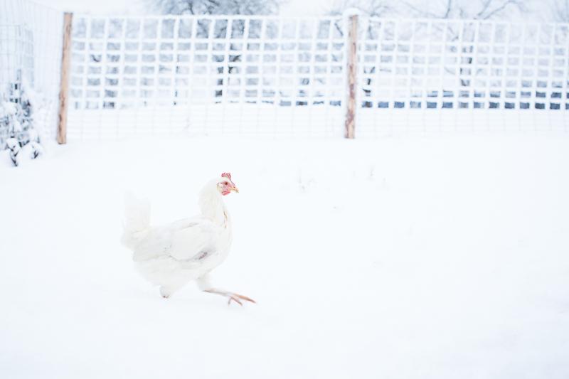 SchneeHenn