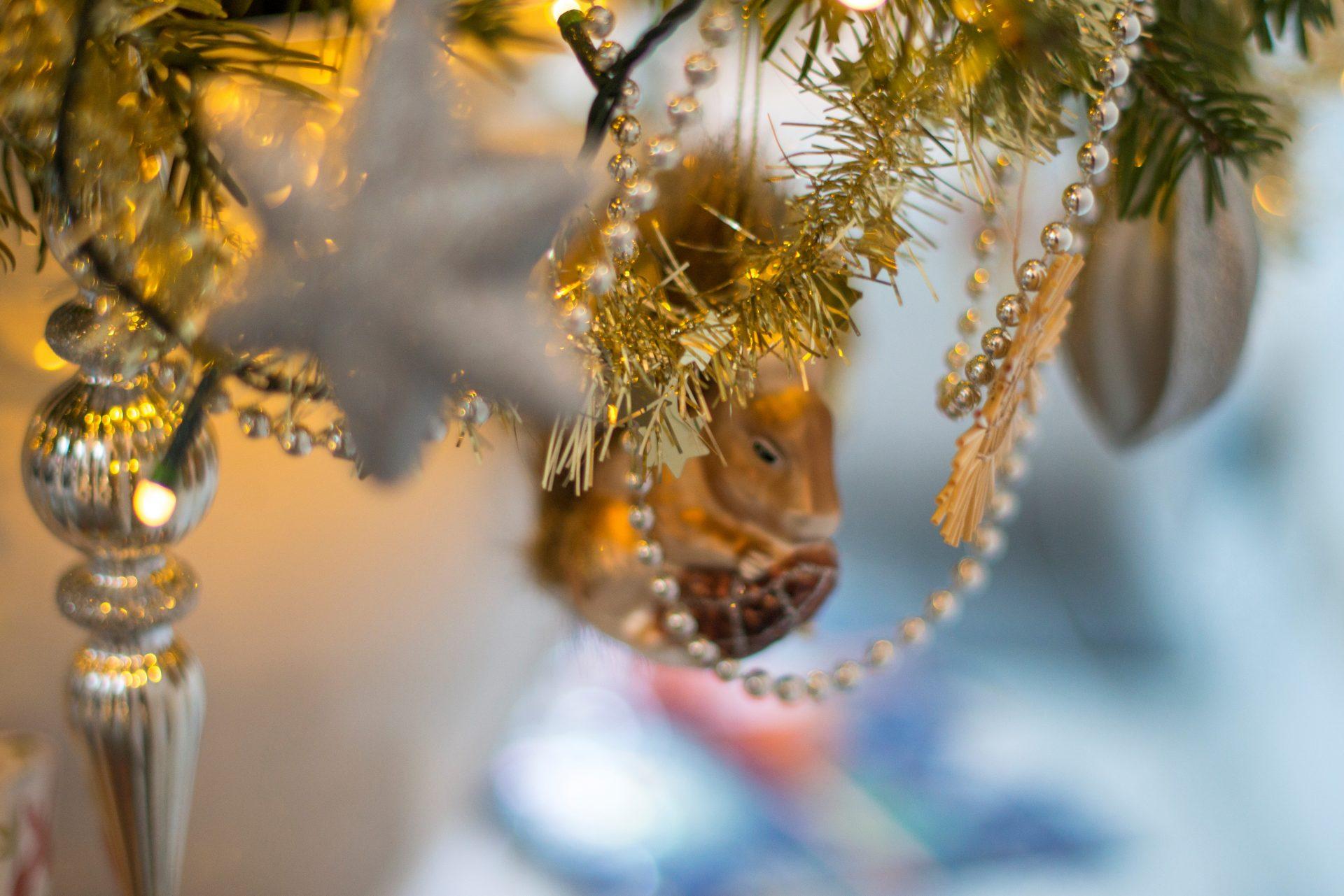 Die Mär vom lebenden Christbaum
