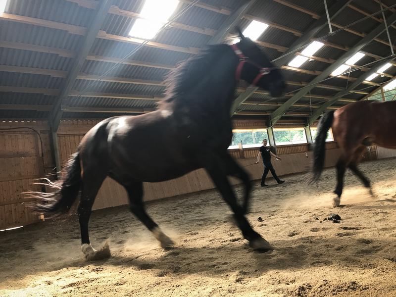 Team am Pferd