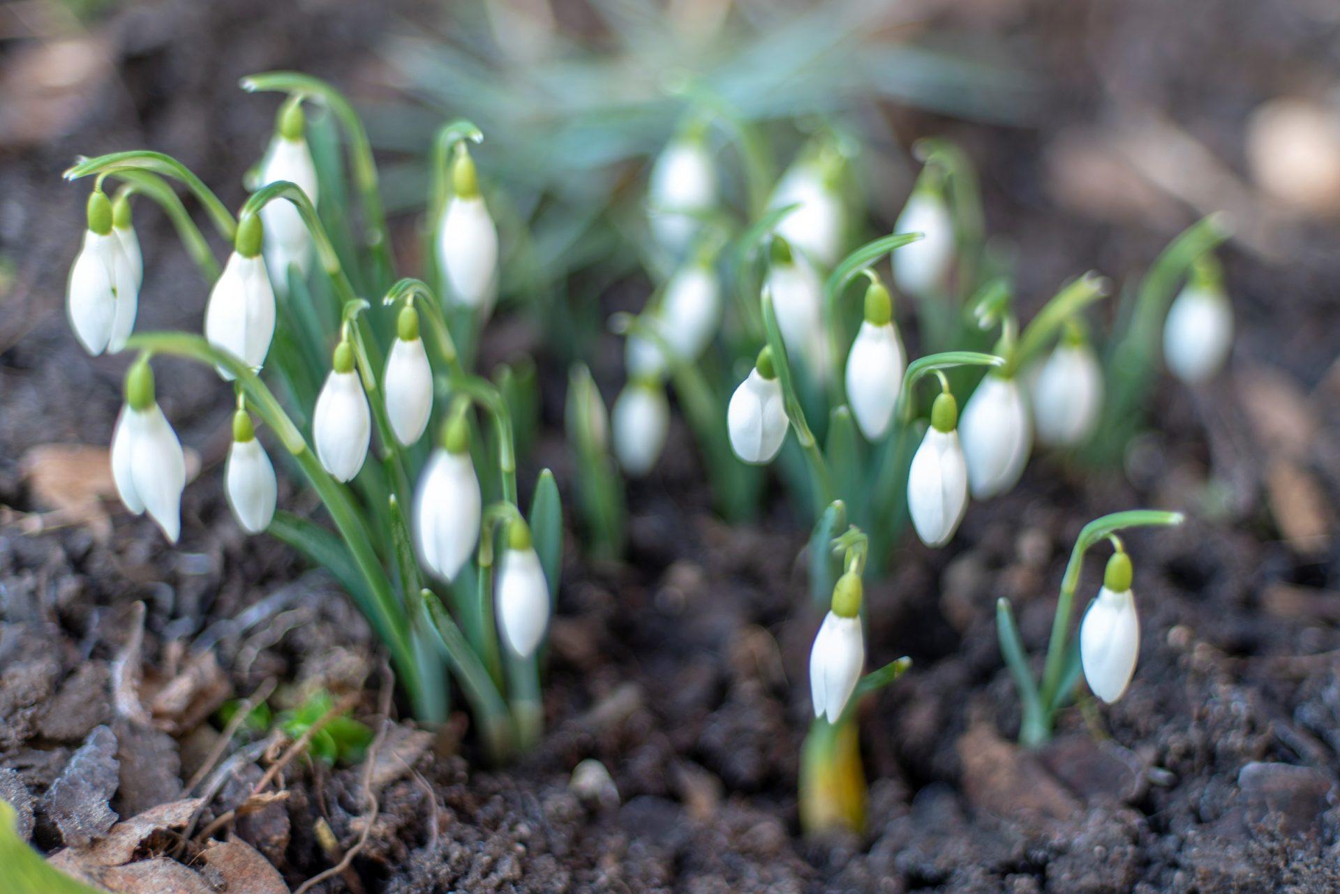 Der Duft der ersten Frühlingserde
