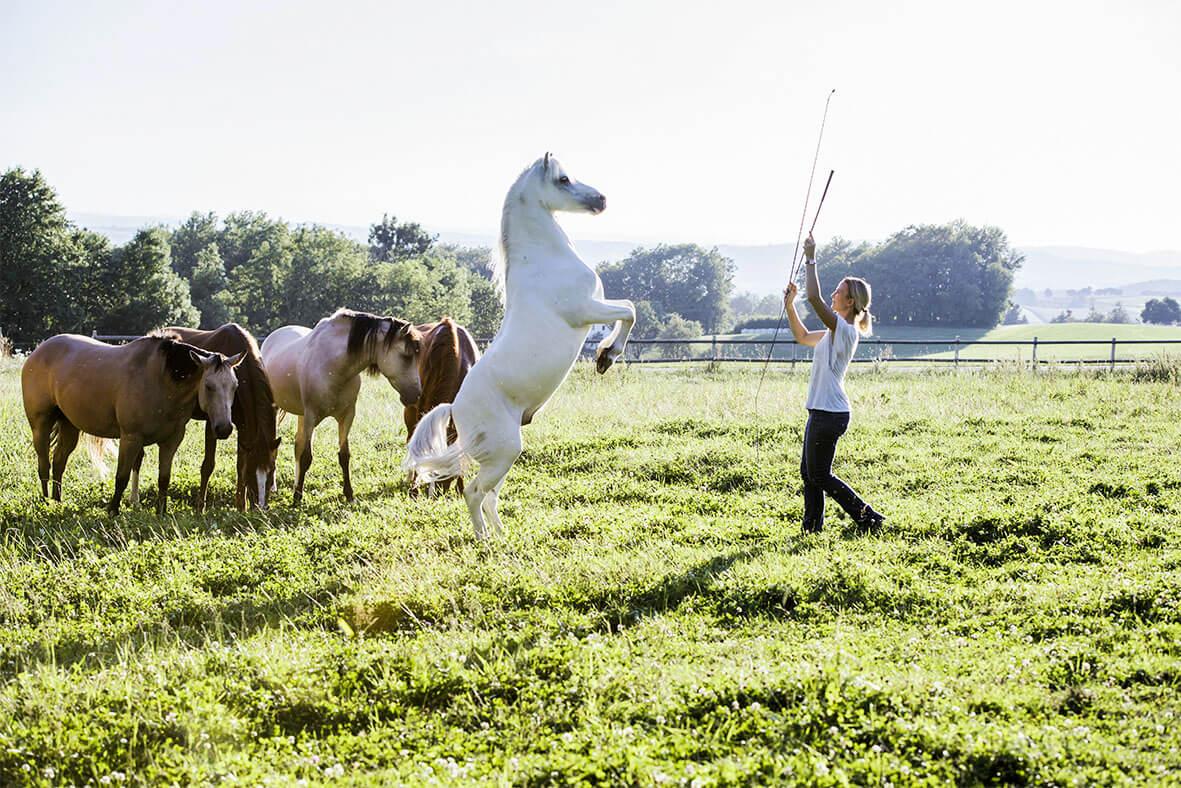 Kerstin & ihre flüsternden Pferde