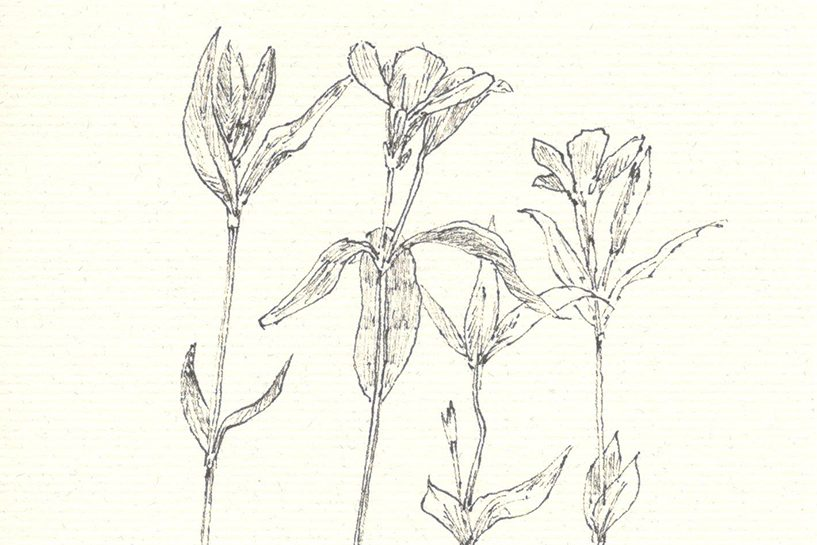Botanische Post